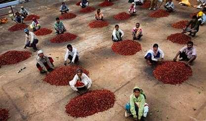 Кофе родом из Индии